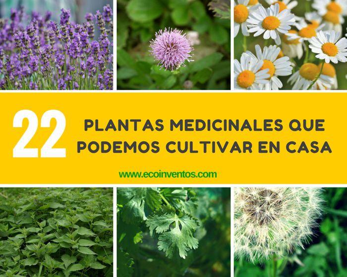 22 plantas medicinales que podemos cultivar en casa for Plantas ornamentales y medicinales