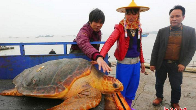 Chinese fisherman turns down equivalent of a month   s wage to instead let rare sea turtle live Read m