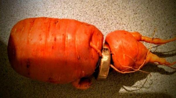 Carrot unearths man's long-lost wedding ring