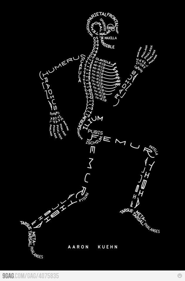 Los huesos humanos (fácil de aprender)