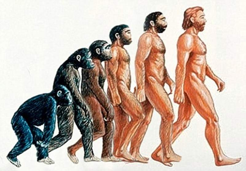 Proof of evolution that you can find on your own body