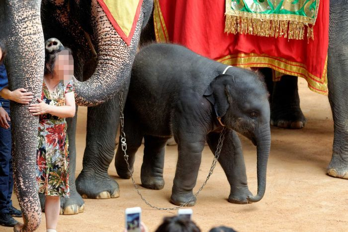 Animal cruelty exposed as World Animal Protection uncovers top 10 worst wildlife attractions