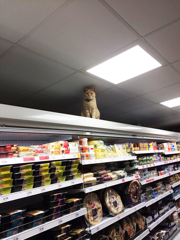 Cat Proves He   s The True Owner Of This Supermarket In London
