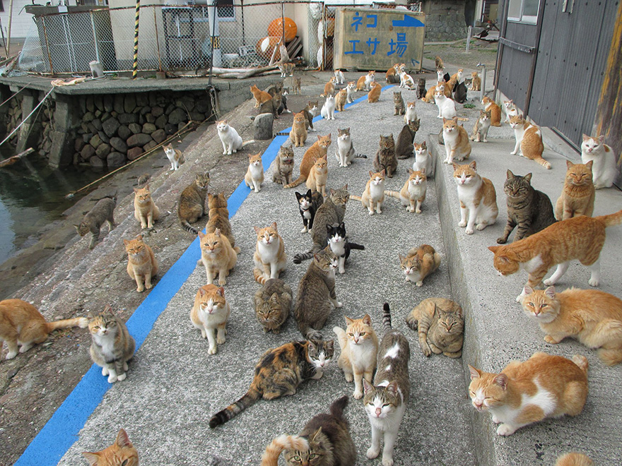 Japan   s Cat Island Asks Internet For Food, Gets More Than They Can Store