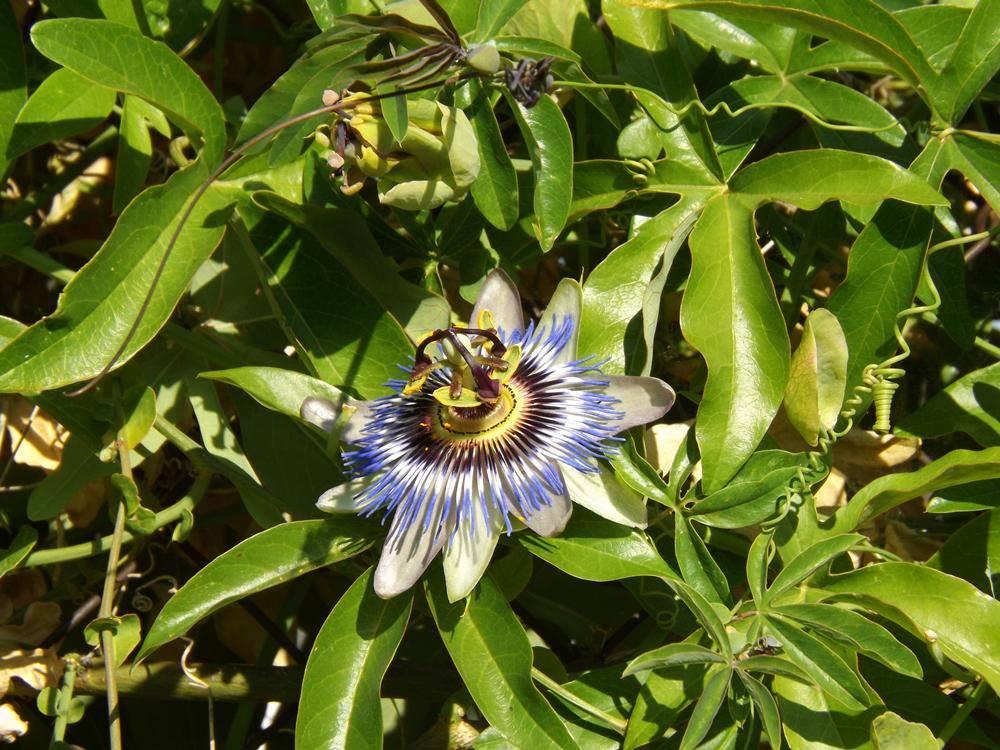 Plantas medicinales for Hierbas y plantas medicinales