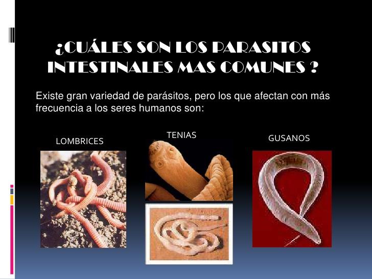 sintomas de los parasitos intestinales en humanos