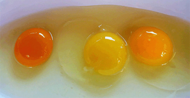 Which One Of These Egg Yolks Looks The Most Normal To You?