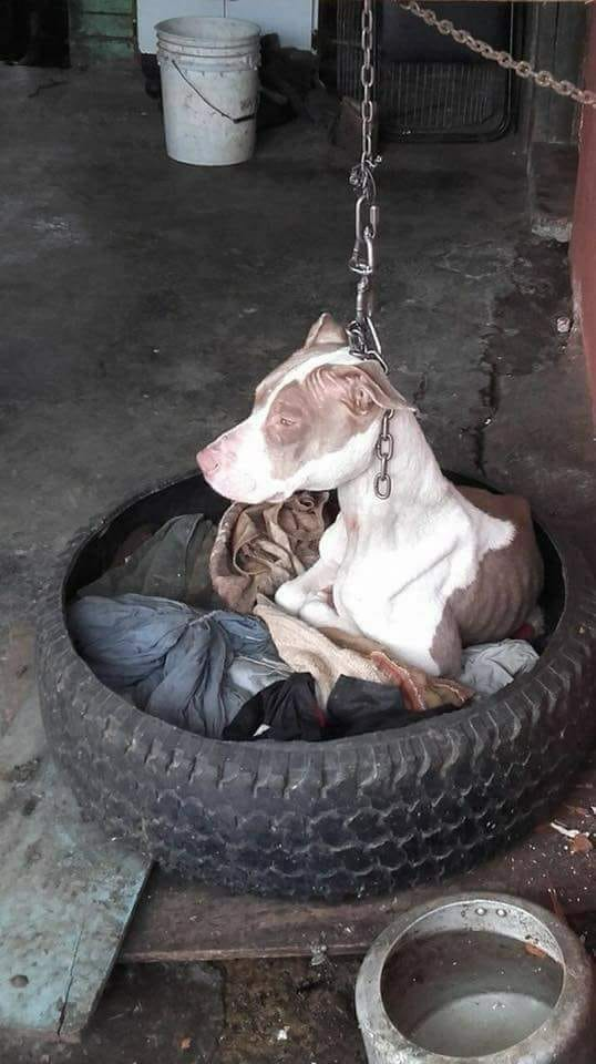 Dog chained to post can   t even rest head, then animal hero decides there   s only one thing to do