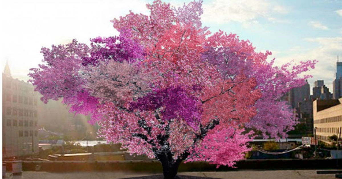 This crazy, beautiful tree grows a staggering 40 different kinds of fruit