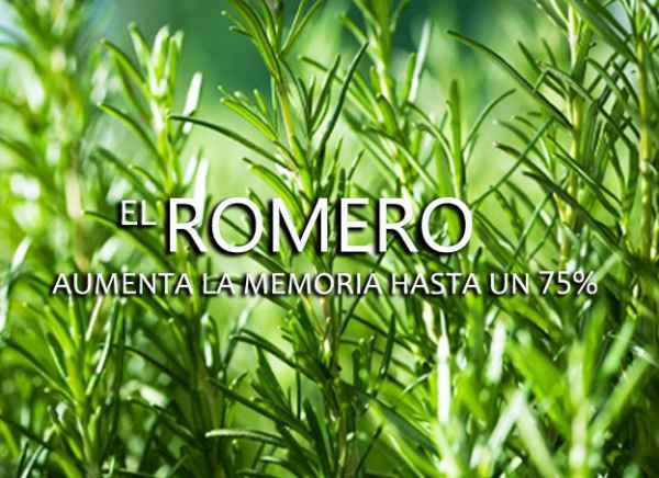 Romero para el cabello caida