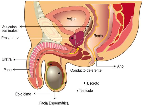 cáncer de próstata comprobado que se cura solo