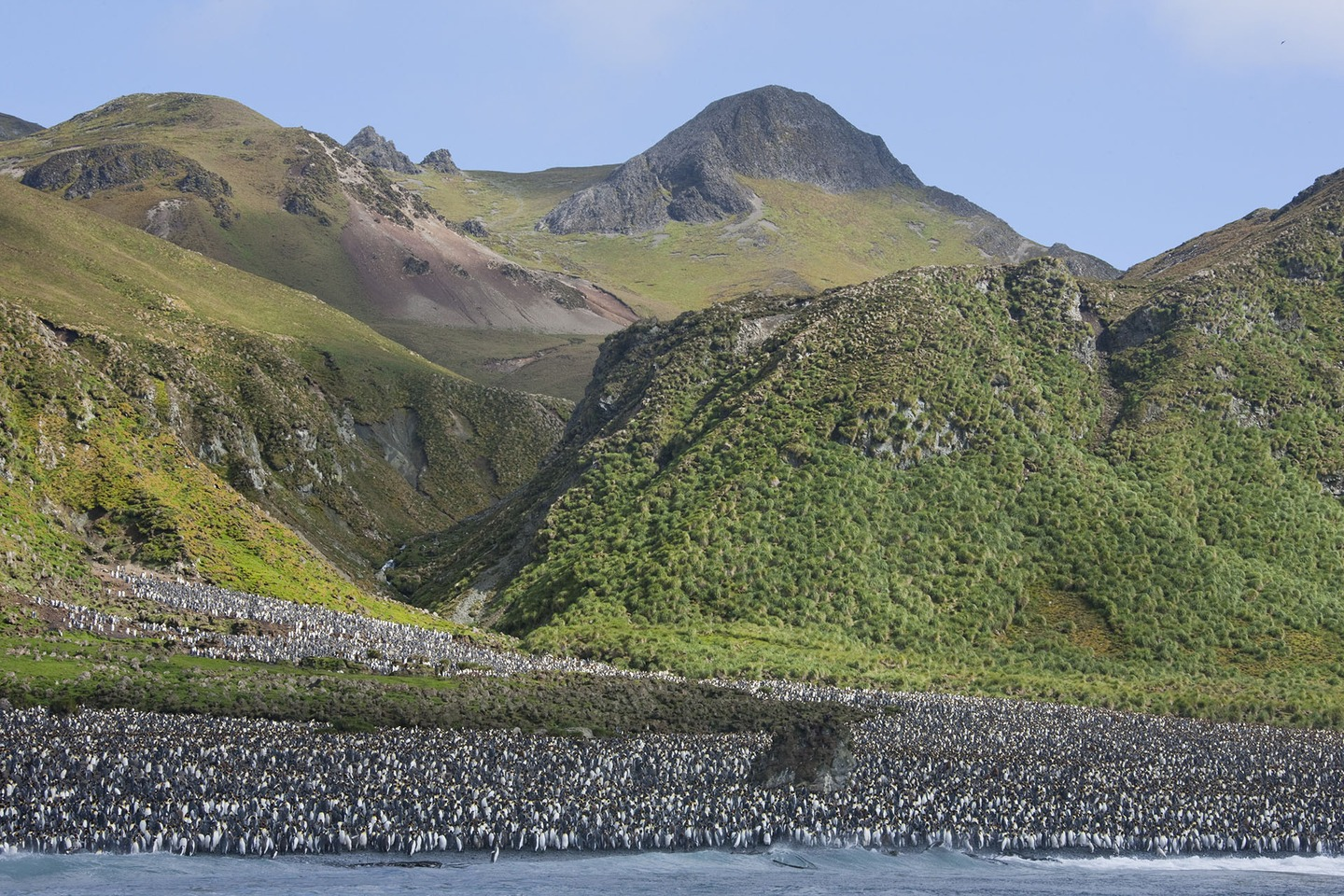 The tiny green island where penguins rule