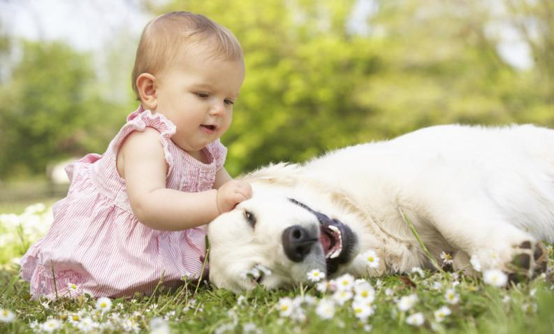 Is the kindness of the dogs in their DNA?