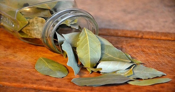 If you burn a bay leaf in your home your body will thank you later