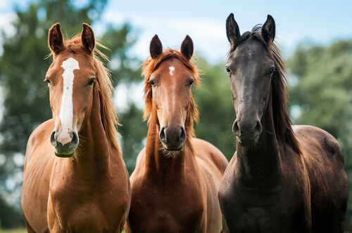 Horses can communicate with us