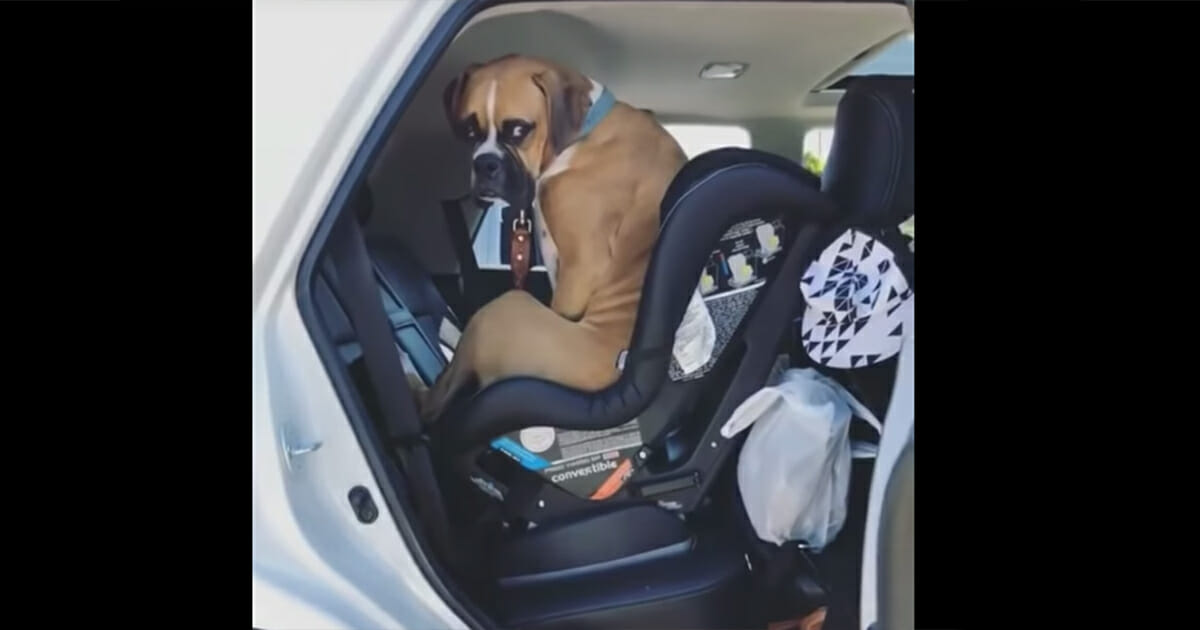 Mom tells dog to get out the car, his response has the internet in fits of laughter