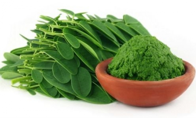 Moringa, the herb that kills cancer and stops diabetes