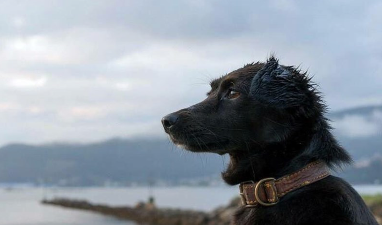 He is Comando, the dog that faithfully awaits the arrival of the Argentine submarine ARA San Juan