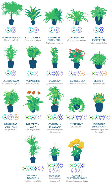 Top 18 houseplants for purifying the air you breathe, according to NASA