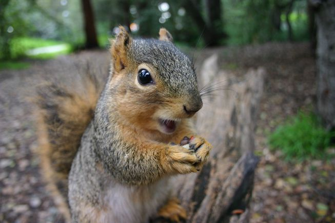 Squirrel knocks on family window every day: years later they realize what she   s trying to show them