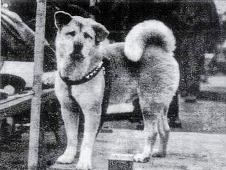 Do you know Hachiko? Here's his story