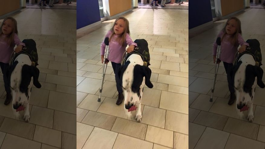 """Great"" Dane: 131-pound dog helps guide 11-year-old with rare genetic condition"