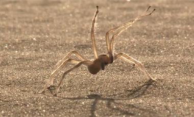 Una nueva especie de araña ha sido descubierta 70973_foto_63524