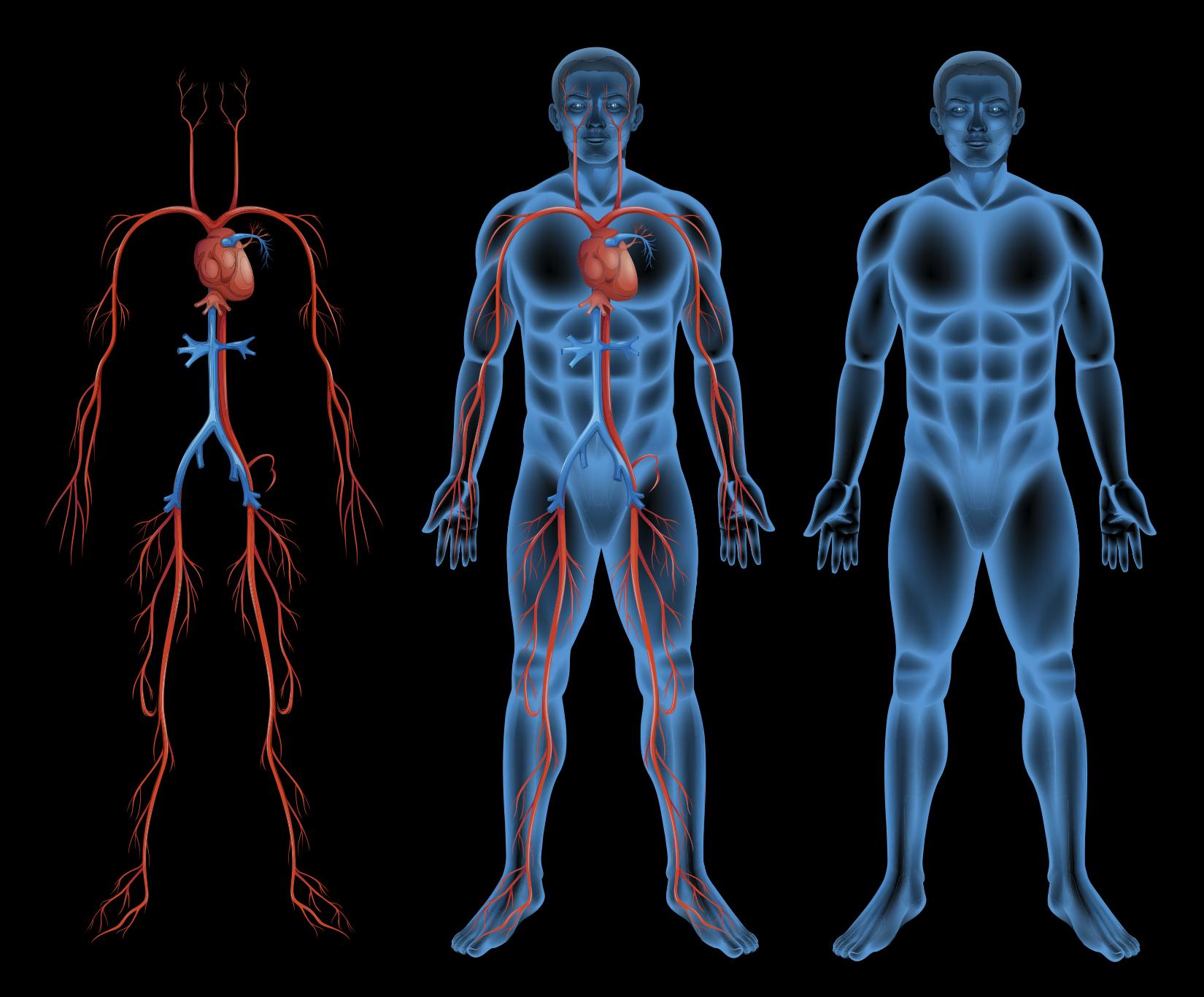 ejercicios para la circulacion dela sangre