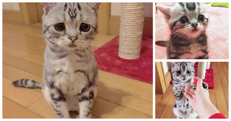Meet The Newest Internet Sensation, The Saddest Cat In The World
