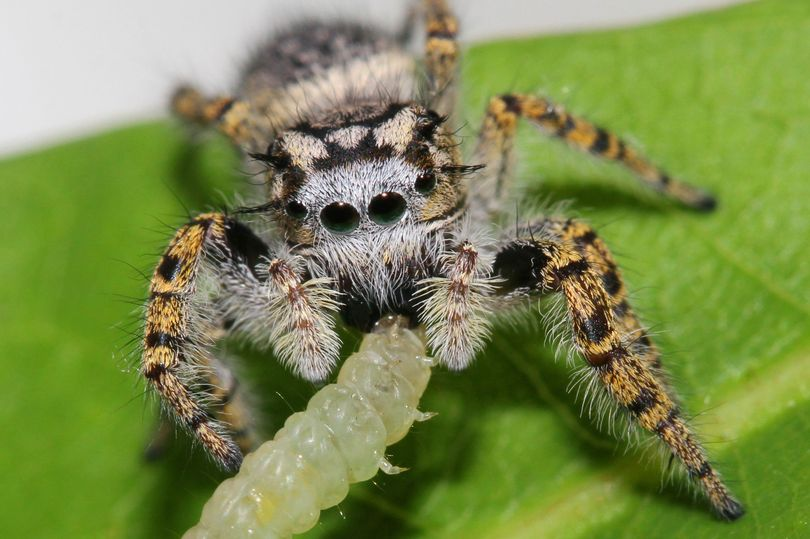 Terrifying amount of prey spiders devour each year revealed for the first time