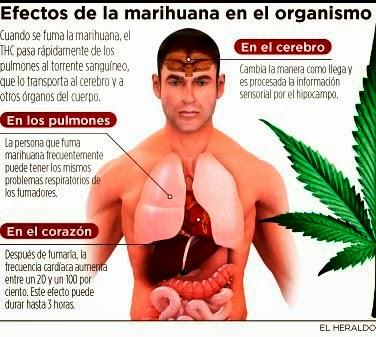hierba buena: Efectos en el celebro,corazn, pulmones