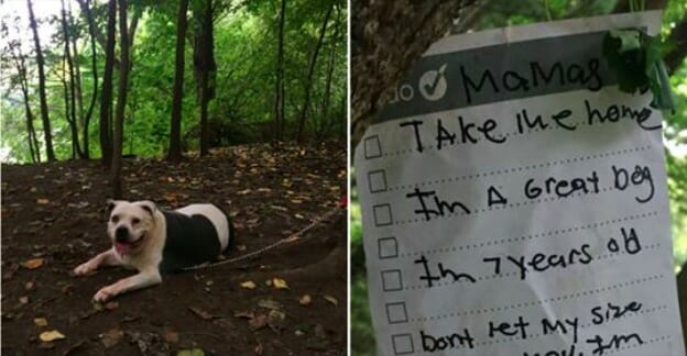 Pit bull discovered alone and tied to tree with note in New York park