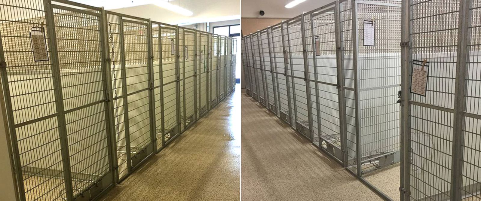 Animal Shelter Finds Homes for Every Cat and Dog in Its Facility
