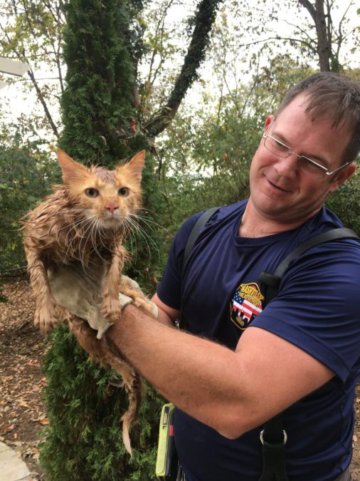 Know the history of this cat that was 7 hours trapped in a pipe
