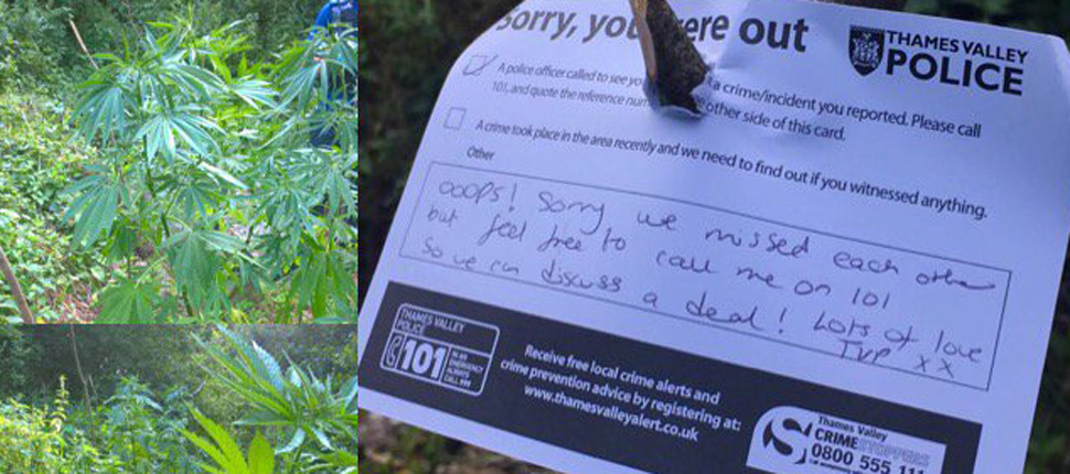 Police in Britain found a field of marijuana plants and left the owner a polite note