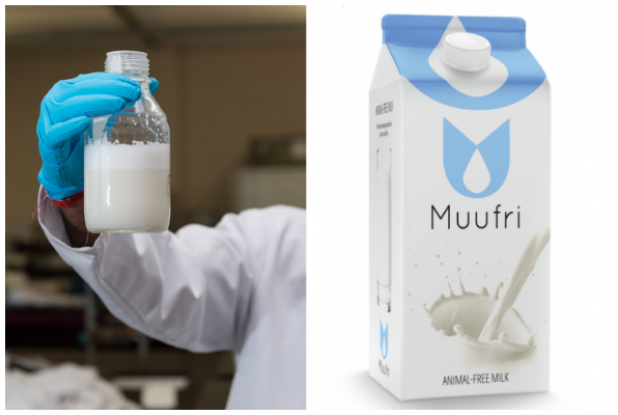 World's first artificial cow's milk to hit the market next year