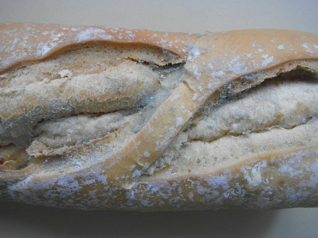Moldy bread: Here   s what happens to your body when you eat the    clean    part