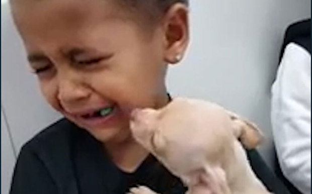 Watch This Little Boy   s Reaction When He Gets To Hold A Puppy